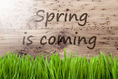 Sunny Wooden Background intelligent, Gras, ressort des textes vient photographie stock