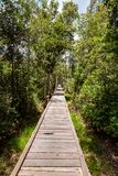 Sunny wooden trail in the jungle on the way to Camp Leakey, the most famous feeding station for Orangutans inside the park. Sunny wooden trail in the jungle on stock photo