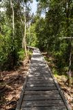 Sunny wooden trail in the jungle on the way to Camp Leakey, the most famous feeding station for Orangutans inside the park. Sunny wooden trail in the jungle on stock photography
