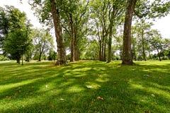 Sunny woods Royalty Free Stock Photo