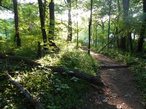 Sunny Woods With Trail and Fallen Tree stock photo