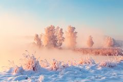 Beautiful winter morning landscape. Tall frosty trees covered with frost on riverside. royalty free stock images