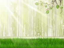 Sunny yard with grass Stock Images