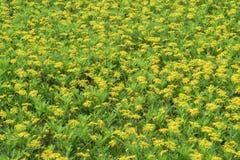 Sunny yellow flowers background Stock Photo