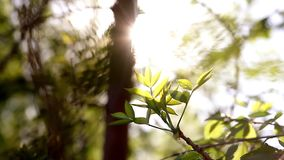 Sunny young green spring leaves of birch tree, natural eco seasonal background with copy space. Natural bright background with birch leaves stock video footage