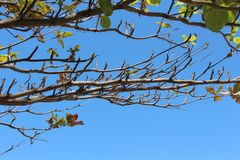 Sunnyday e bluesky Fotografia de Stock