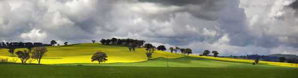 Sunnyside Cowra Landscape Canola Views. Picturesque views from Sunnyside Road, Cowra.  Menacing storm clouds over undulating fields of flowering canola  now and Royalty Free Stock Photo