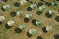 sunparaplyer Royaltyfria Bilder