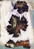 Sunprinting das folhas da videira imagem de stock