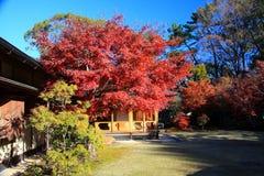 Sunpu kasztel, Shizuoka miasto, Japonia Obraz Royalty Free