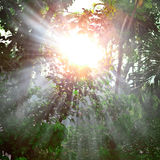 Sunray behind tropical tree Royalty Free Stock Images