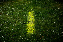 Sunray on grass Royalty Free Stock Photography