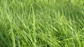 Sunray on the grass. During the summer Royalty Free Stock Photos