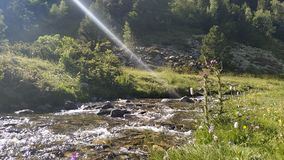 Sunray on the river. Water, rocks, plant, green, trees, mountain royalty free stock photos