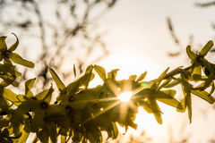 Sunray Stock Images