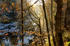 Sunray thought forest in winter near Saut du doubs, Franchecomté. Natural site royalty free stock photos