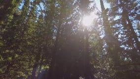 Sunrays μεταξύ των δέντρων απόθεμα βίντεο