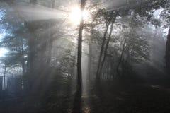 Sunrays στο ξύλο Στοκ φωτογραφία με δικαίωμα ελεύθερης χρήσης