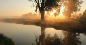 Туманный рассвет на реке с первыми sunrays Видео со звуком - песней птицы акции видеоматериалы