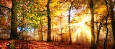 Sunrays золота в туманном лесе осени стоковое изображение rf
