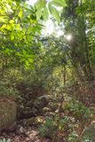 Sunrays светя через leafes тропического леса стоковые изображения