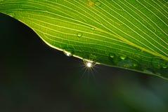 sunrays утра росы Стоковое фото RF