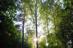 Sunrays через листву сердца форменную Стоковое Изображение