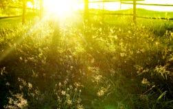 Sunrays Стоковое Фото