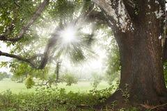 Sunrays Stock Image