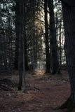 Sunrays Στοκ εικόνες με δικαίωμα ελεύθερης χρήσης