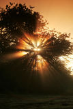 Sunrays Royalty Free Stock Photos