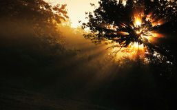 Sunrays Royalty Free Stock Images