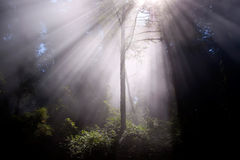 Sunrays através das árvores Foto de Stock Royalty Free