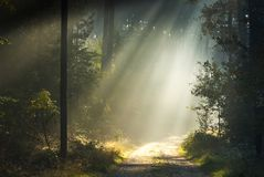 Sunrays in a forest Royalty Free Stock Photos