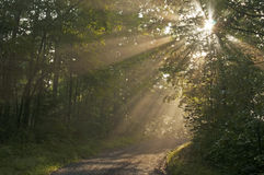 Sunrays bring life to a small mountain road. Stock Images