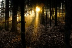 Sunrays bursting through the forest Royalty Free Stock Photos