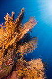 Sunrays in the coral garden. A Coral garden in the red sea stock photos