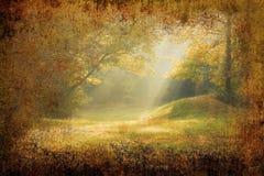 Sunrays de matin tombant sur une clairière de forêt Photo stock