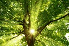 Sunrays dramatycznie spada przez drzewa Obrazy Stock
