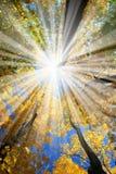 Sunrays en el bosque Fotografía de archivo