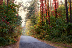 Sunrays in the fall forest Stock Photography