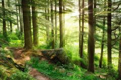 Sunrays falling into a vibrant green forest Stock Image