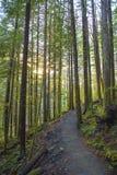 Sunrays filtruje przez lasowego ulistnienia w Vancouver wyspie zdjęcia royalty free