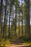 Sunrays filtruje przez lasowego ulistnienia w Vancouver wyspie, Kanada zdjęcia stock