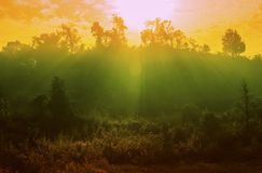 Sunrays fog Stock Photo