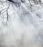 Sunrays in the foggy leafless forest. In early spring royalty free stock photography