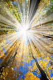 Sunrays in the forest Stock Photography
