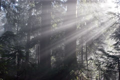 Sunrays in the forest. Morning light illuminating the forest Stock Photo