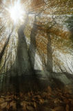 Sunrays in the forest Royalty Free Stock Photography