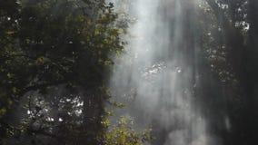 Sunrays i dym zdjęcie wideo